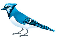 blue jay communications